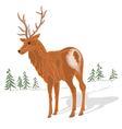 Young-deer vector image