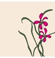Chinese element drawing orchid vector image