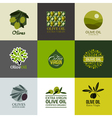 Set of labels and emblems with olive branch vector image