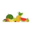 juicy fruit and berries vector image