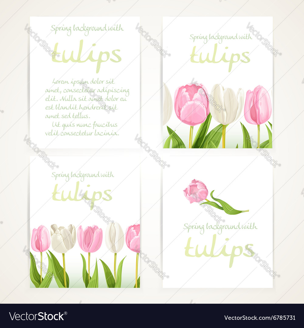 Pink and white tulips on four vertical blank vector