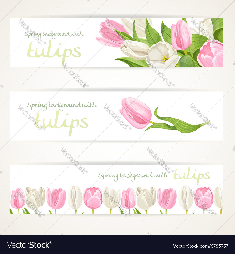 Pink and white tulips on three horizontal banner vector