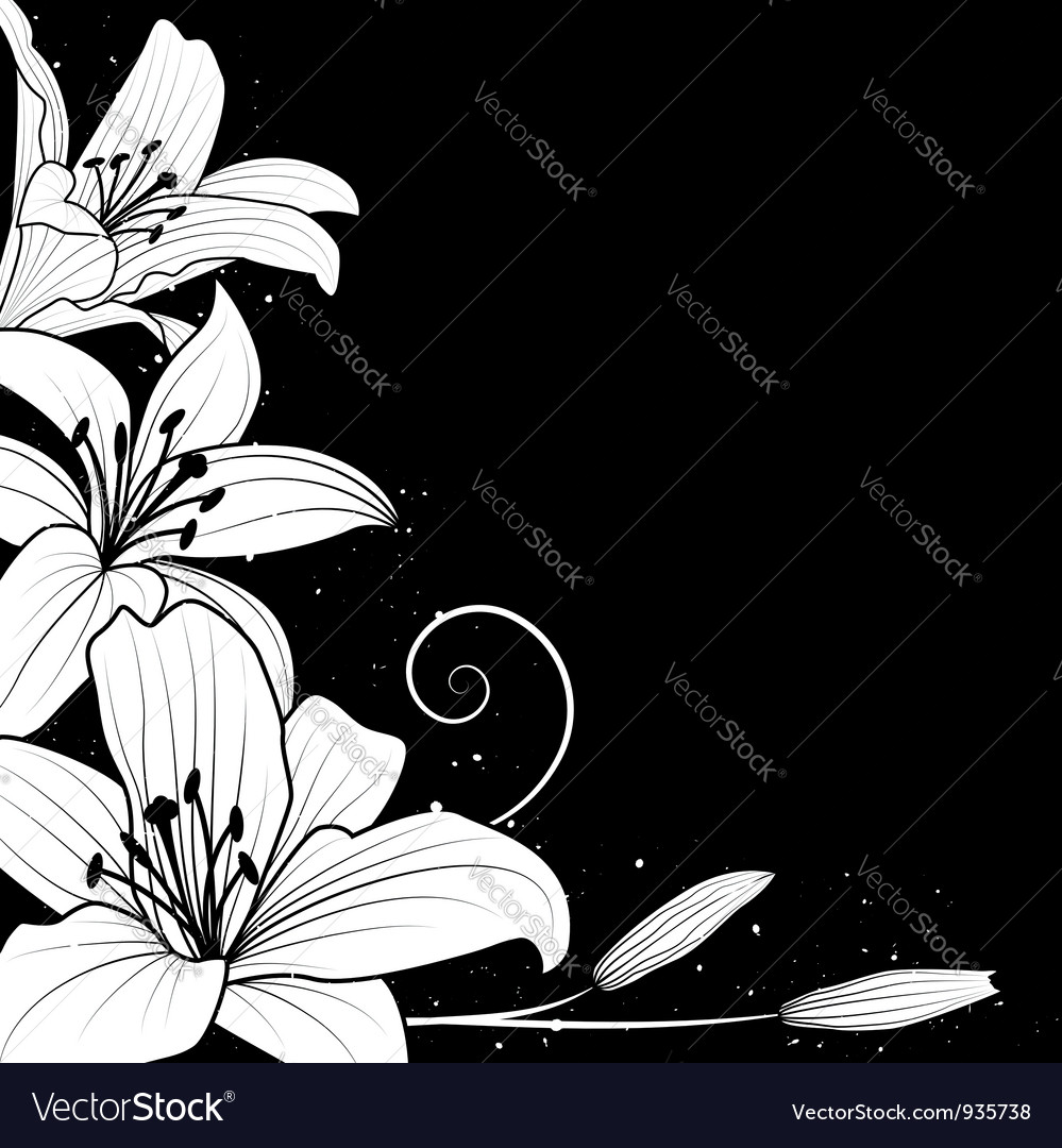 Lily on black vector