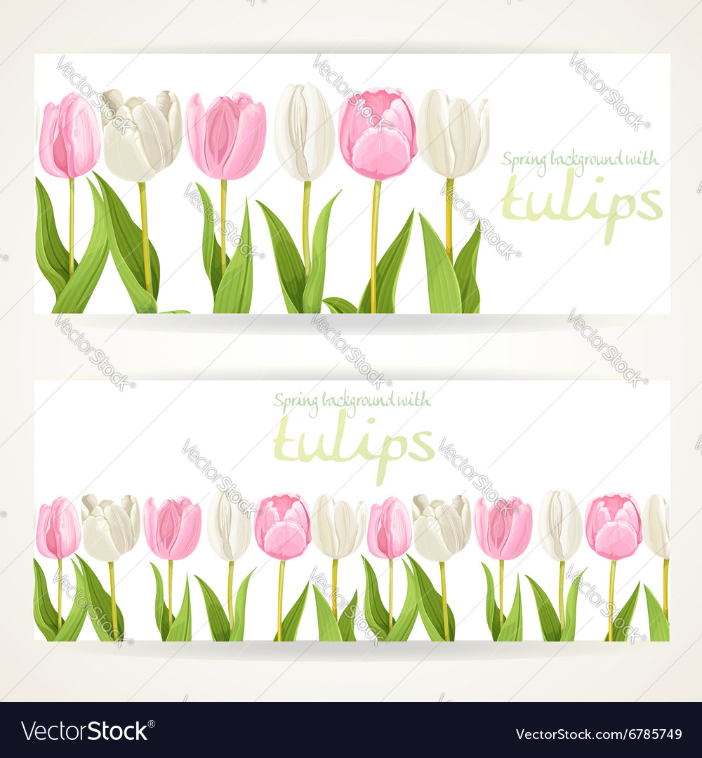 Pink and white tulips on two horizontal banners on vector