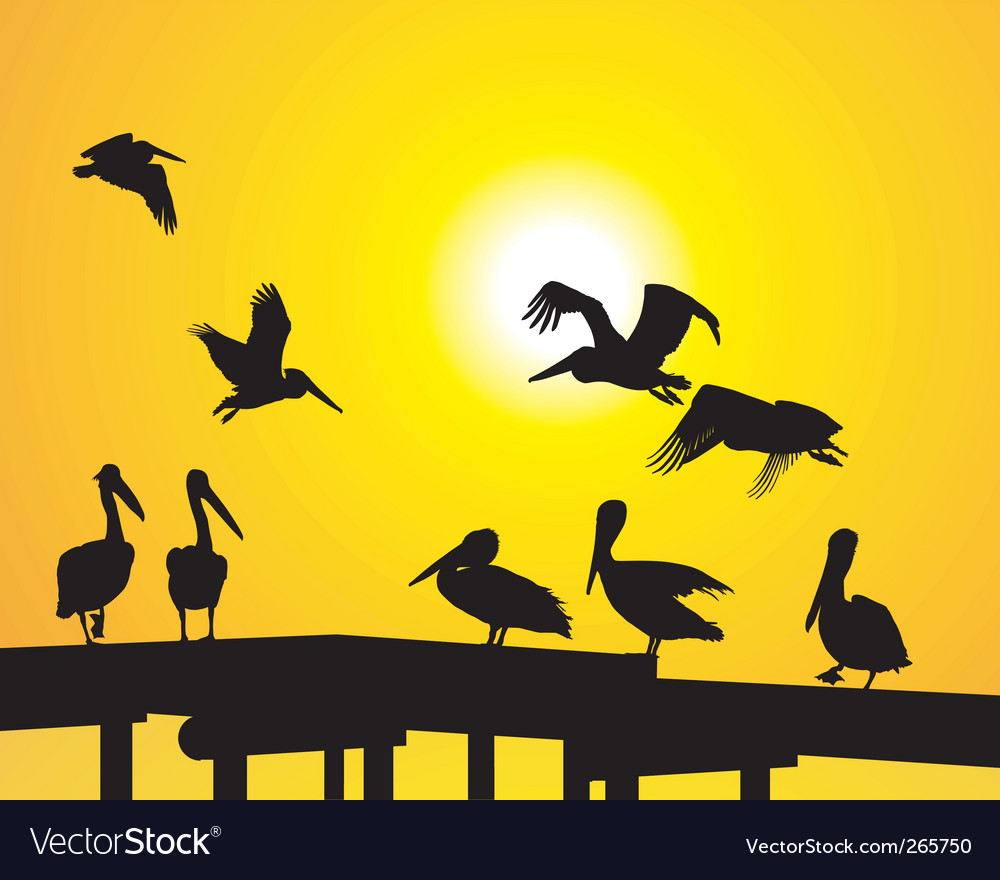 Pelican silhouettes vector