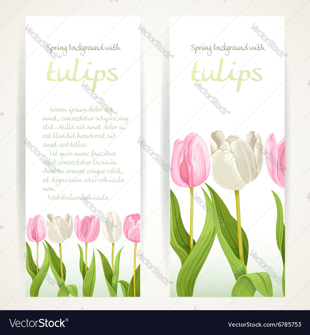 Pink and white tulips on two vertical blank vector