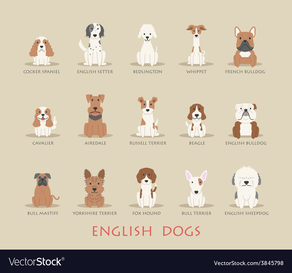 Set of english dogs vector