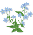 bouquet of forget-me-nots vector image