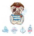 pirate pug dog vector image