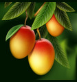 mango on branch vector image