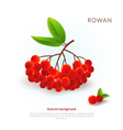 Rowan Autumn background vector image