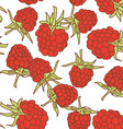 ripe raspberry seamless pettern isolated on white vector image