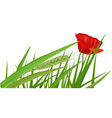red poppy in a green grass vector image