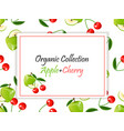 square cherry and apple label vector image