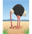 Ostrich hiding head in sand vector image vector image