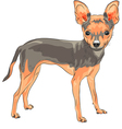 cute dog Chihuahua vector image