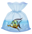 A fish inside the plastic container vector image