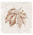 Hand drawn cocoa beans vector image