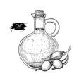 bottle of olive oil and olive branch hand vector image