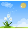 spring background with white dandelion vector image