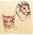 lion and cheetah vector image