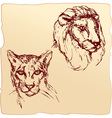 lion and cheetah vector image