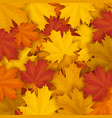 fallen maple autumn leaves background vector image vector image