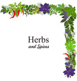collection of herbs and spices for you design vector image vector image