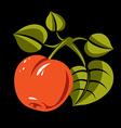 Vegetarian organic food simple ripe orange vector image