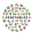 vegetable icon circle infographics colorful banner vector image