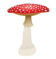 fly agaric mushroom isolated on white background vector image