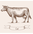 Cow in Vintage engraving vector image