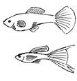 guppy fish vector image