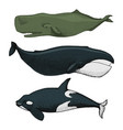 blue whales marine creatures finback and vector image