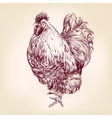 chicken vintage hand drawn vector image