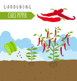 Gardening work farming Chili pepper Graphic vector image