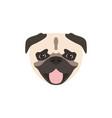 pug dog icon isolated on white background animal vector image