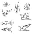 fish sketch vector image