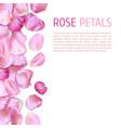 pink rose petals border vector image