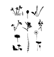 Collection of flower isolate vector image