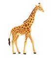giraffe standing isolated vector image