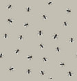 seamless pattern with flies vector image