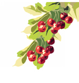 Ripe Red Cherry fruits vector image