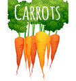 Fresh carrots with text design vector image