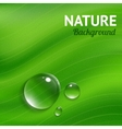 Nature background with transparent water drops vector image