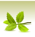 green leaves on light background vector image