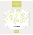 Product sticker with hand drawn melissa leaves vector image