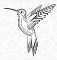 colibri or hummingbirds for logo icon t-shirt vector image