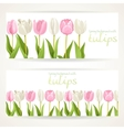 Pink and white tulips on two horizontal banners on vector image