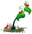 A green plant with ants vector image vector image